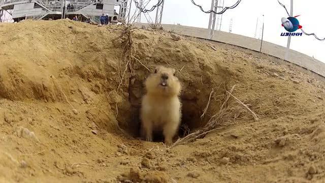 La tana della marmotta nel centro spaziale corriere tv for Immagini talpa