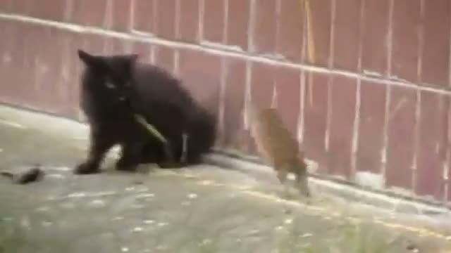 Il topo coraggioso che mette in fuga i gatti - Corriere TV