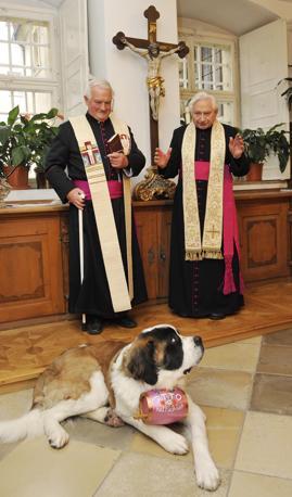 Georg Ratzinger, fratello di papa Benedetto XVI, ha dato la sua benedizione a Otto, uno splendido esemplare di San Bernardo che sarà utilizzato come cane da catastrofe. La cerimonia si è svolta nella chiesa vecchia di Ratisbona, nel sud della Germania. Mons Ratzinger ha detto di essere felice di avere benedetto il cane perché, ha detto, «aiuterà la gente e la renderà felice». Rispettando la più perfetta iconografia dei cani da catastrofe, Otto porta al collo un barilotto sul quale è riportata la scritta: «Otto vi ama» (Oliver Lang / Afp)
