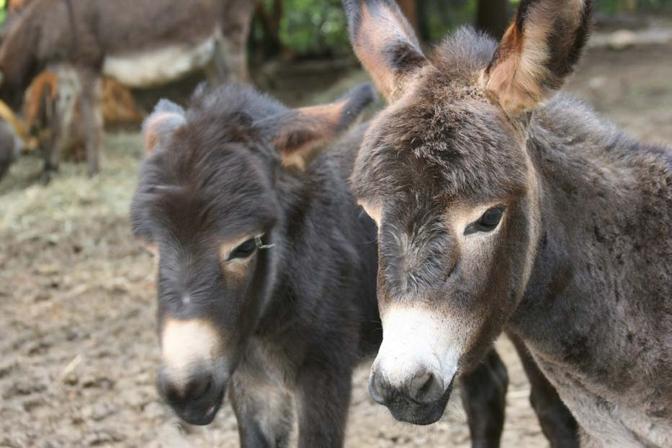 Donkey sanctuary nel mondo - Sala biellese asini ...