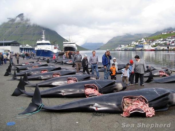 Le foto scattate in incognito da un attivista di Sea Sheperd