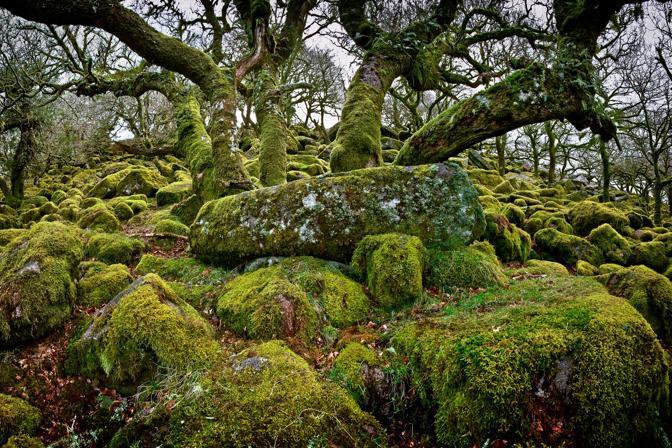Vegetazione del Dartmoor National Park, un altopiano situato nella contea inglese di Devon (© Neil Lucas)