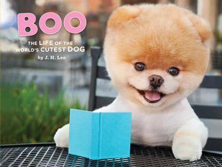 Ecco Boo, un volpino di Pomerania di 5 anni che sulla sua pagina di Facebook ha 1,4 milioni di fan. L'animale ha anche firmato il contratto per un libro (foto da Facebook)
