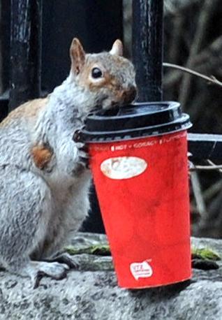 Londra, una carica di energia per lo scoiattolo affaticato. L'animale infatti si è bevuto un caffè (Olycom)