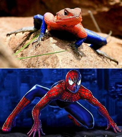 Il confronto tra la lucertola e Spiderman