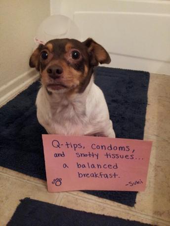 Cani Cattivi Un Sito Raccoglie Le Denunce
