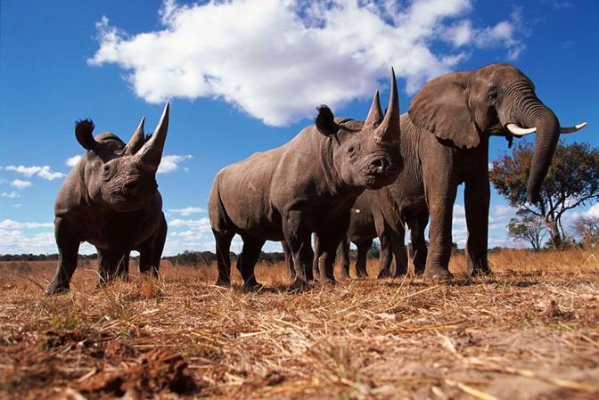 Rinoceronti neri ed elefanti (Wwf-Canon)