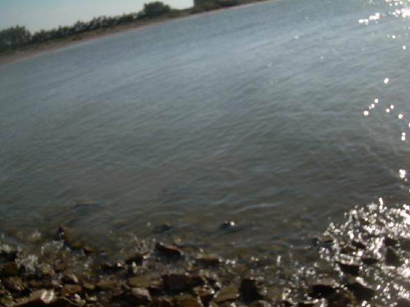 Foce del fiume Ofanto. Ecco l'area protetta. La non curanza dei cittadini e la fame di denaro hanno distrutto anche quest'area verde che è teoricamente protetta ma di fatto lo è ben poco (Segnalazione firmata)