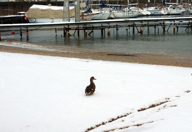Neve anche sulla costa marchigiana. Nella foto il porto di Civitanova Marche, Mc (foto Ipp/Paoloni)