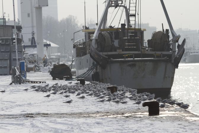 Gabbiani sulla banchina innevata del porto di Rimini (Ansa/Bove)