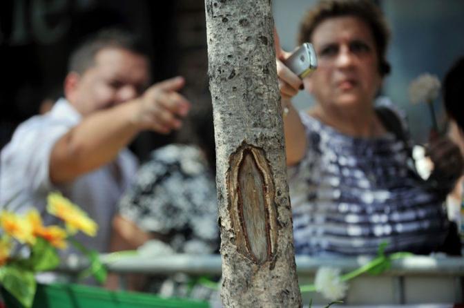 In una strada di West New york, in New Jersey, su un tronco di albero (un ginkgo biloba) c'è un nodo che per alcuni ricorda la Madonna di Guadalupe. Folla di pellegrini e di curiosi (Afp/Honda)