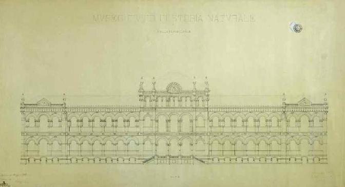 Giovanni Ceruti, disegno di progetto per il prospetto del Museo civico di Storia naturale di Milano, 1888 circa