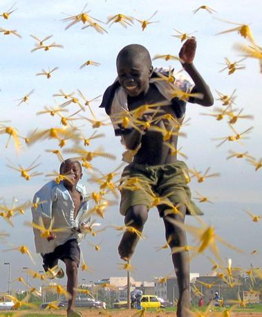 Settembre 2004: bambini senegalesi giocano a Dakar durante un'invasione di locuste (Pierre Holtz/Reuters)