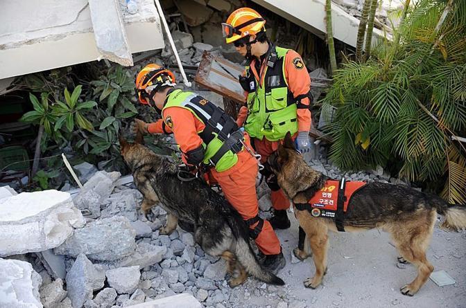 Soccorritori sudcoreani al lavoro tra le macerie con i cani (Epa)