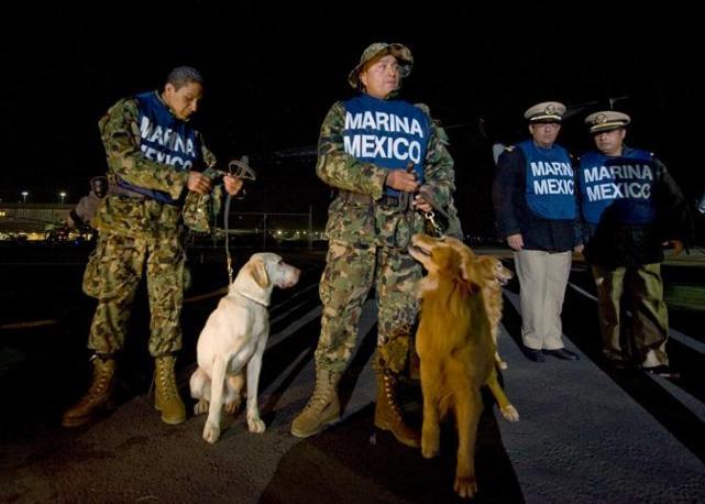 Ci sono squadre cinofile provenienti da tutto il mondo tra le squadre di soccorso inviate ad Haiti per fronteggiare l'emergenza terremoto e per la ricerca di superstiti tra le macerie. Questi sono cani della marina messicana, tra le prime ad essersi mobilitate (Afp)