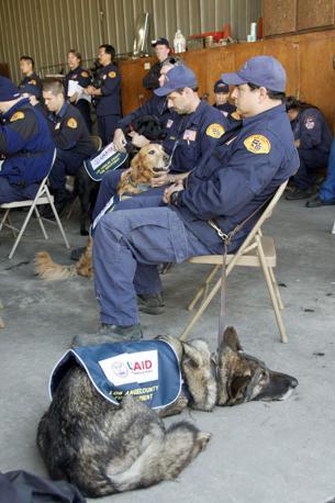 """Un cane """"americano"""" di UsAid (Ap)"""