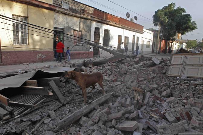 Santiago, un cane tra le rovine (Ap)