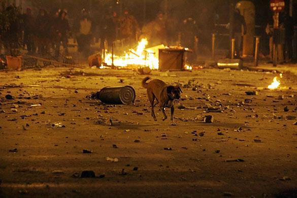 È diventato la mascotte dei manifestanti in Grecia. È?un cane, si chiama Kanellos e in rete è già una celebrità. Da oltre due anni il quadrupede partecipa attivamente ad ogni protesta, rivolta e manifestazione nel Paese. In rete alcuni utenti hanno raccolto una serie di fotografie con Kanellos sempre in prima linea tra la folla. Lo si vede ringhiare davanti ad un cordone di poliziotti in tenuta antisommossa, a cuccia tra i gruppi di manifestanti in strada o gironzolare tranquillamente tra lanci di pietre, bottiglie d'acqua e fumogeni.  Dicembre 2008 (Afp)