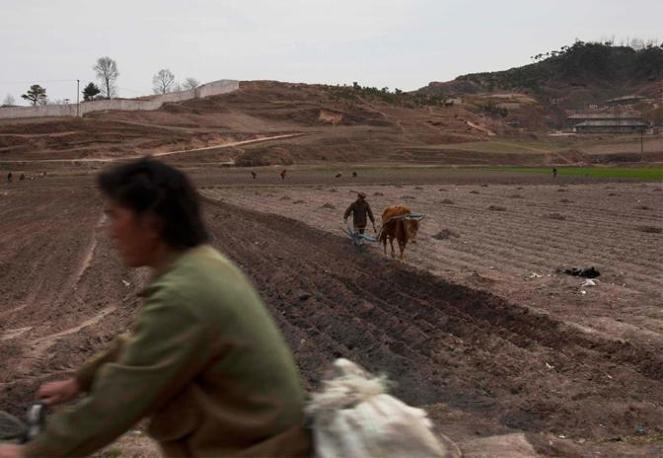 Un campo fuori Kaesong (Ap)
