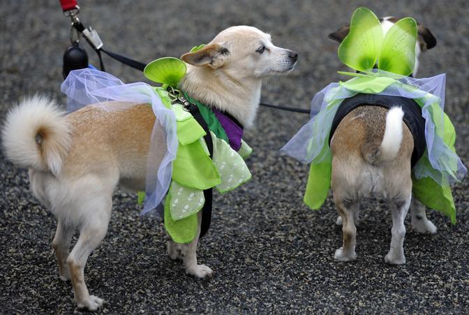 Cani in maschera a New York (Afp)