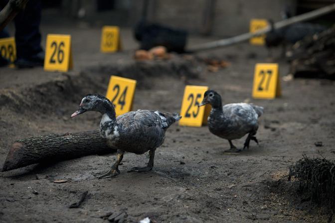 Diverse decine di colpi sono stati esplosi sulla baracca di Canizales, a 22 chilometri da Guatemala City