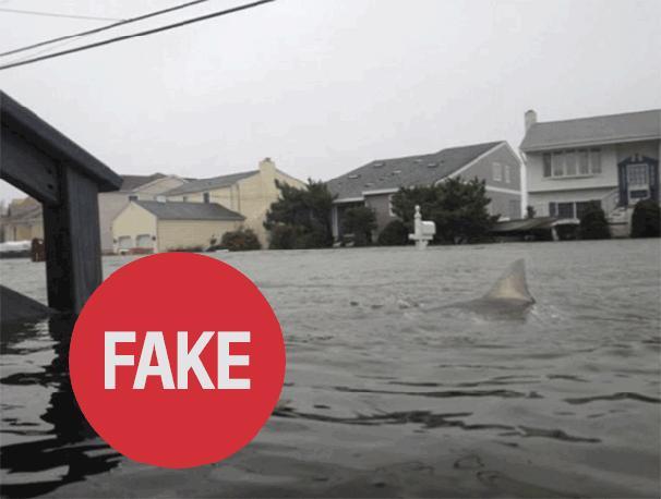 Uno squalo che nuota a Brigantine, New Jersey, è chiaramente un «fake», un falso