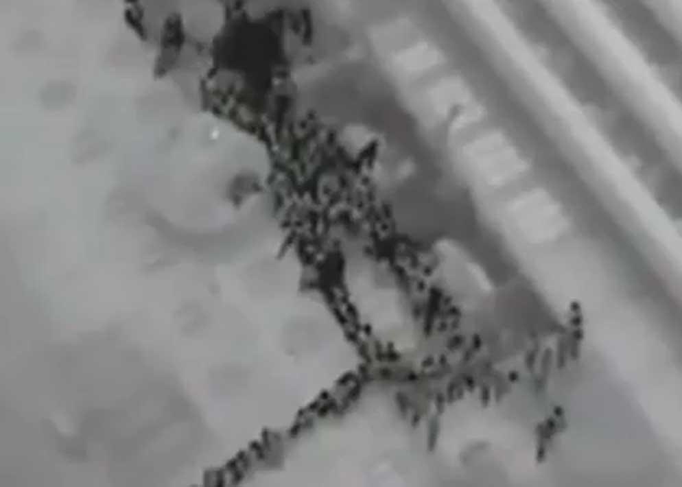 Nell'immagine agli infrarossi ripresa dall'elicottero della Guardia Costiera si vedono le file di  passeggeri sul fianco della nave mentre scendono verso le scialuppe (Ansa)