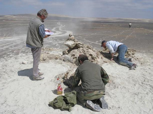 Leviathan nel deserto. Cerro Colorado (Pisco-Ica deserto, 35 km sudovest di Ica, Peru). Da sinistra a destra: Jelle Reumer, Mario Urbina e Kaas Post. Novembre 2008 (foto di G. Bianucci)