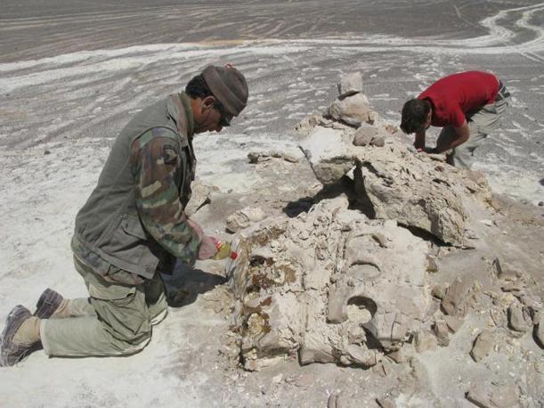 Leviathan nel deserto. Cerro Colorado (Pisco-Ica deserto, 35 km sudovest di Ica, Peru). Da sinistra a destra: Mario Urbina e Olivier Lambert. Novembre 2008 (foto di G. Bianucci)