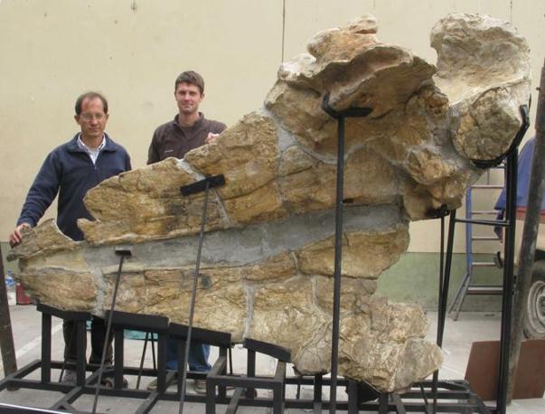 Leviathan in laboratorio. Museo de Historia Natural, Universidad Nacional Mayor de San Marcos, Lima. A sinistra: Giovanni Bianucci; a destra: Olivier Lambert. Settembre 2009 (foto di G. Bianucci)