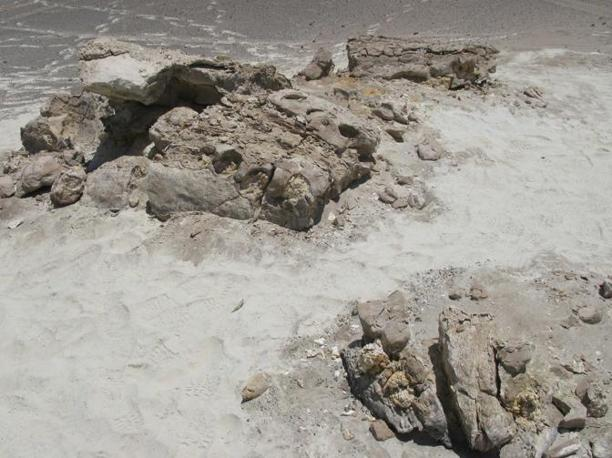 Leviathan nel deserto. Cerro Colorado (Pisco-Ica deserto, 35 km sudovest di Ica, Peru). Novembre 2008