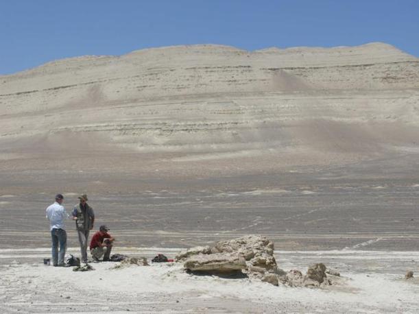 Leviathan nel deserto. Cerro Colorado (Pisco-Ica deserto, 35 km sudovest di Ica, Peru). Da sinistra a destra: Klaas Post, Jelle Reumer e Olivier Lambert (foto di G. Bianucci).