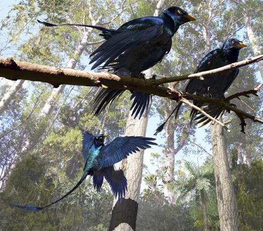 Aveva  piume nere con riflessi iridescenti blu, simili a quelle di un corvo (Ansa)