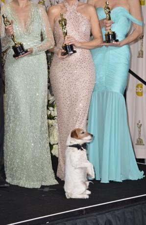 Il cane Uggie in posa per le foto dopo la premiazione (Afp)