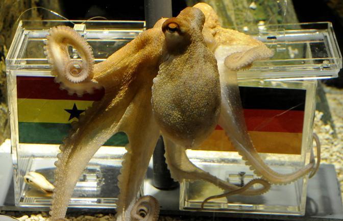La previsione di Paul per Germania-Ghana (Ap)