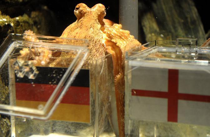 Paul ha azzeccato anche il risultato di Germania-Inghilterra (Ap)