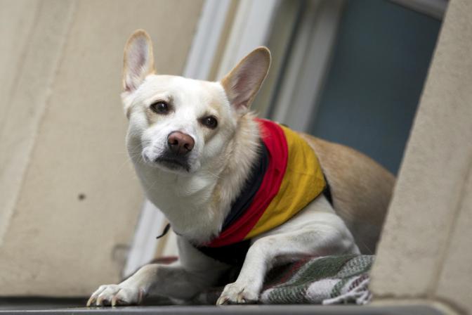 Germania-Portogallo, un cagnolino vestito con la bandiera tedesca si affaccia da una finestra (Reuters/Peter)