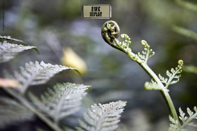 I misteri della foresta neozelandese