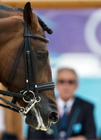 Grandioso, il cavallo dello spagnolo Martin Dockx, attende di cimentarsi nel dressage (Afp)