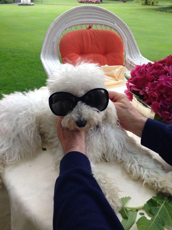 Il cane Dudù (con gli occhiali in braccio forse a Berlusconi) in uno scatto sul bolg della Bonev
