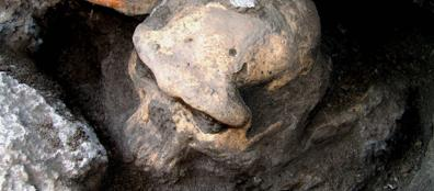 L'ominide scoperto in Georgia (Ap)