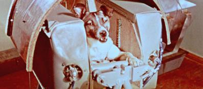 Laika, primo essere vivente ad andare in orbita nel '57