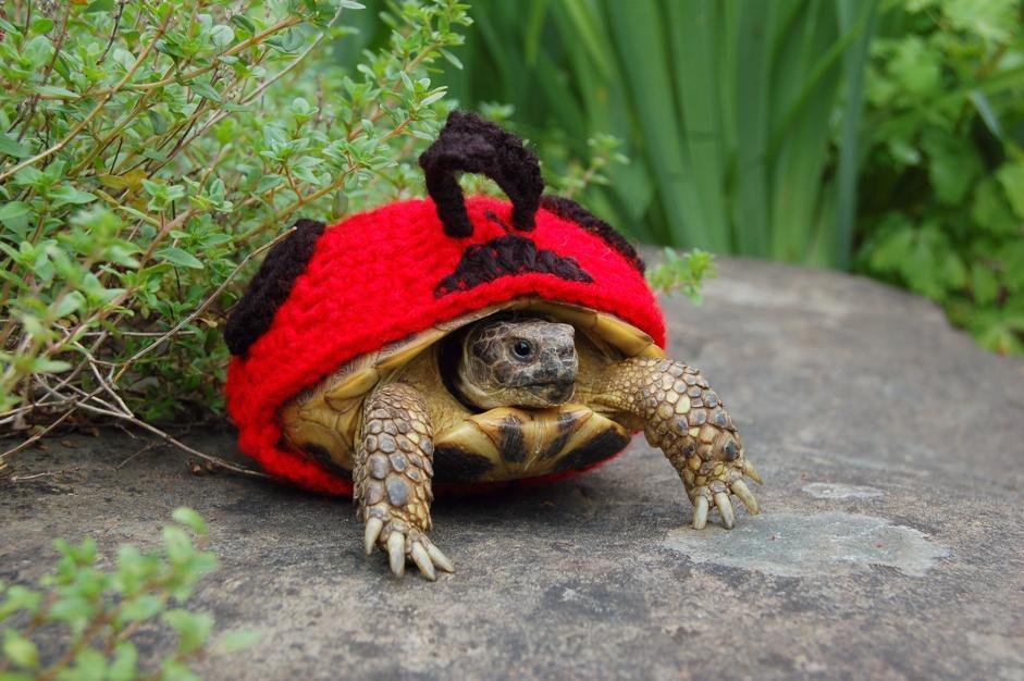 Gusci all uncinetto per riconoscere le tartarughe for Tutto per le tartarughe