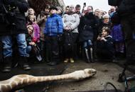 Le proteste non salvano il piccolo MariusLo zoo di Copenaghen uccide il piccolo di giraffa