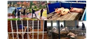Zoo, moto d?epoca e bunker, gli ucraini occupano la tenuta presidenziale