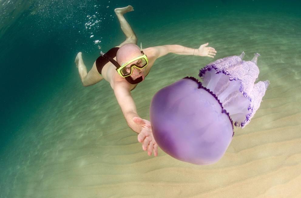 Sardegna nuotando con le meduse giganti for Ponte delle cabine di rapsodia dei mari 2