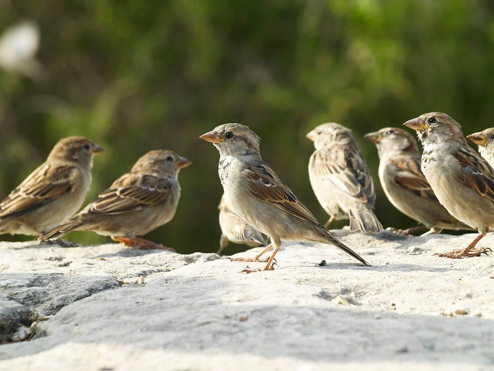 i piccoli uccelli comuni importanti e dimenticati