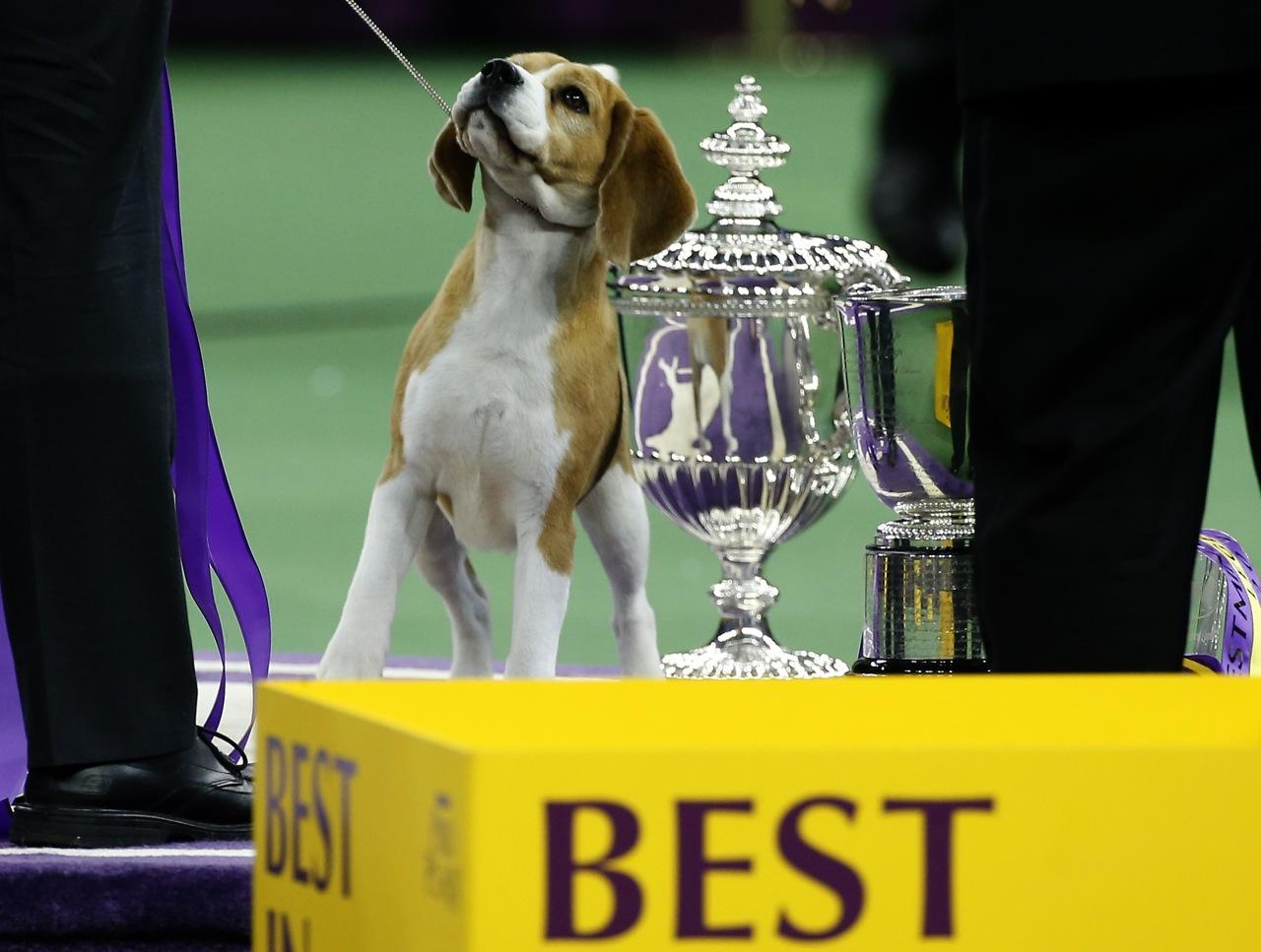 Westminster Dog Show Usa