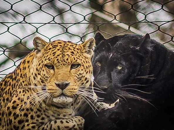 Animali al Parco Faunistico Le Cornelle , a Valbrembo, Bergamo (Fotogramma)