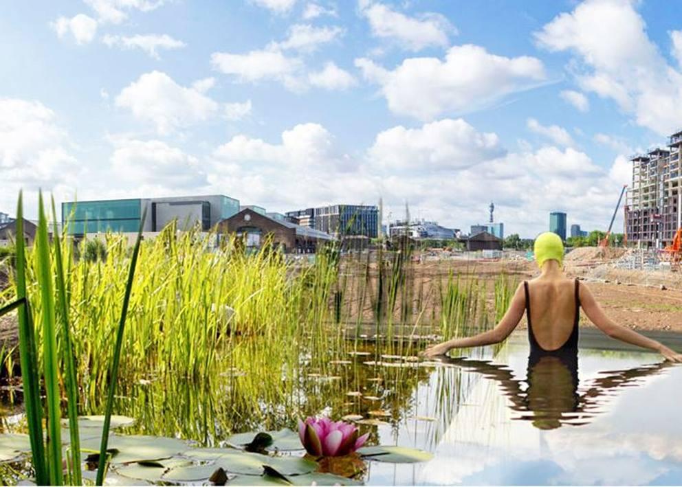 La Piscina Naturale Con Fitodepurazione Di Londra